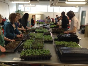 Students in Greenhouse Cultivation Class (Hort 335); Photo Credit Johanna Oosterwyk